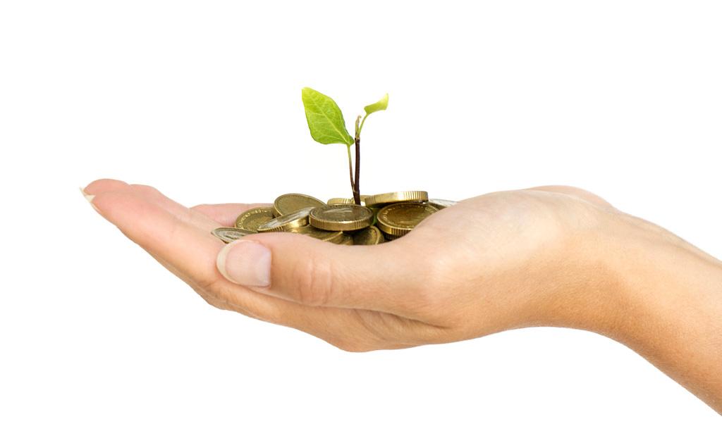 Money & Plant